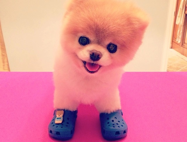 Boo almost makes Crocs adorable...Almost (Instagram)