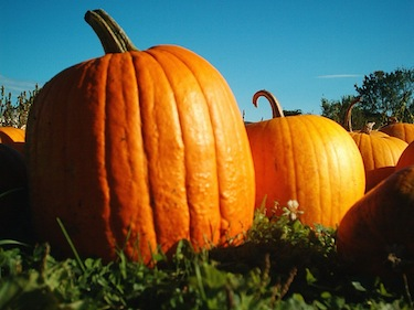 Pumpkins are often used in sweet desserts, but don't let that limit your autumn menu! (Túrelio / Wikimedia Commons)