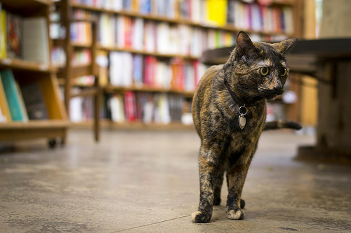 Store mascot Franny patrols the aisles at Skylight Books in West L.A. (Judy L. Wang/Neon Tommy)